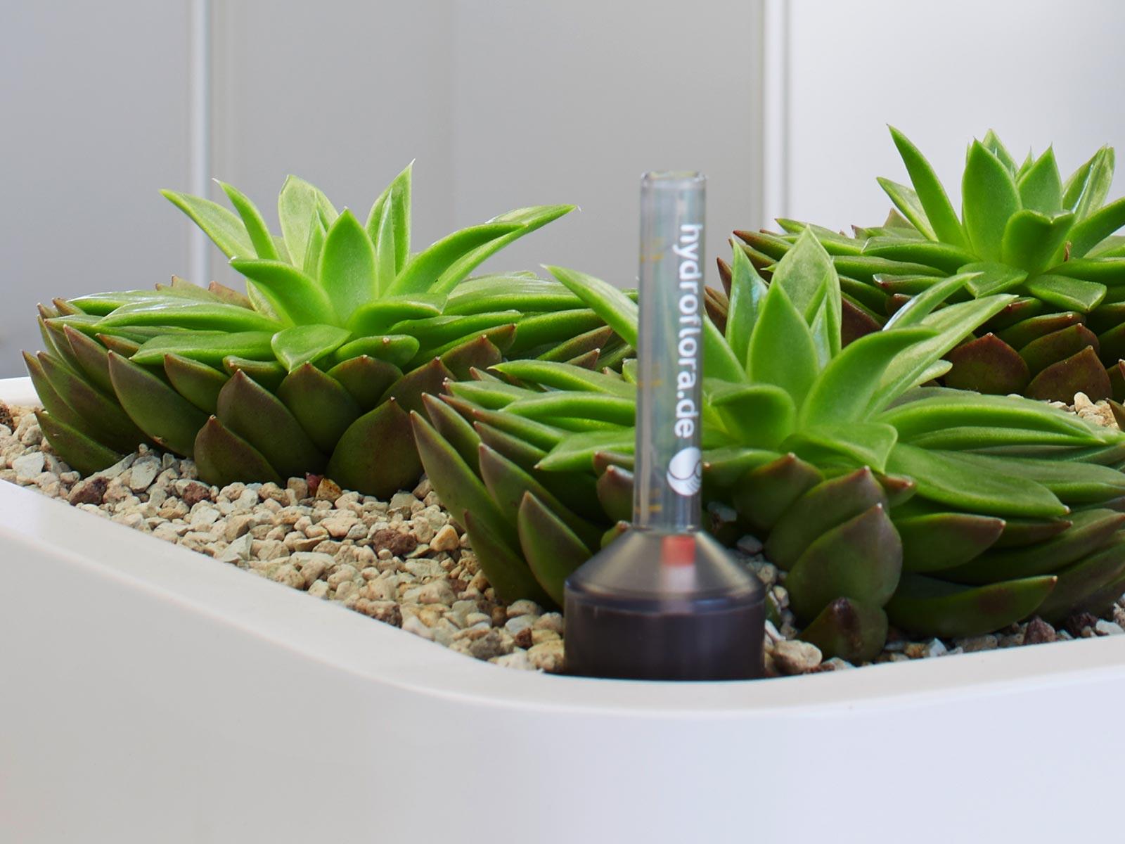 Hydrokultur Hydroflora Gmbh