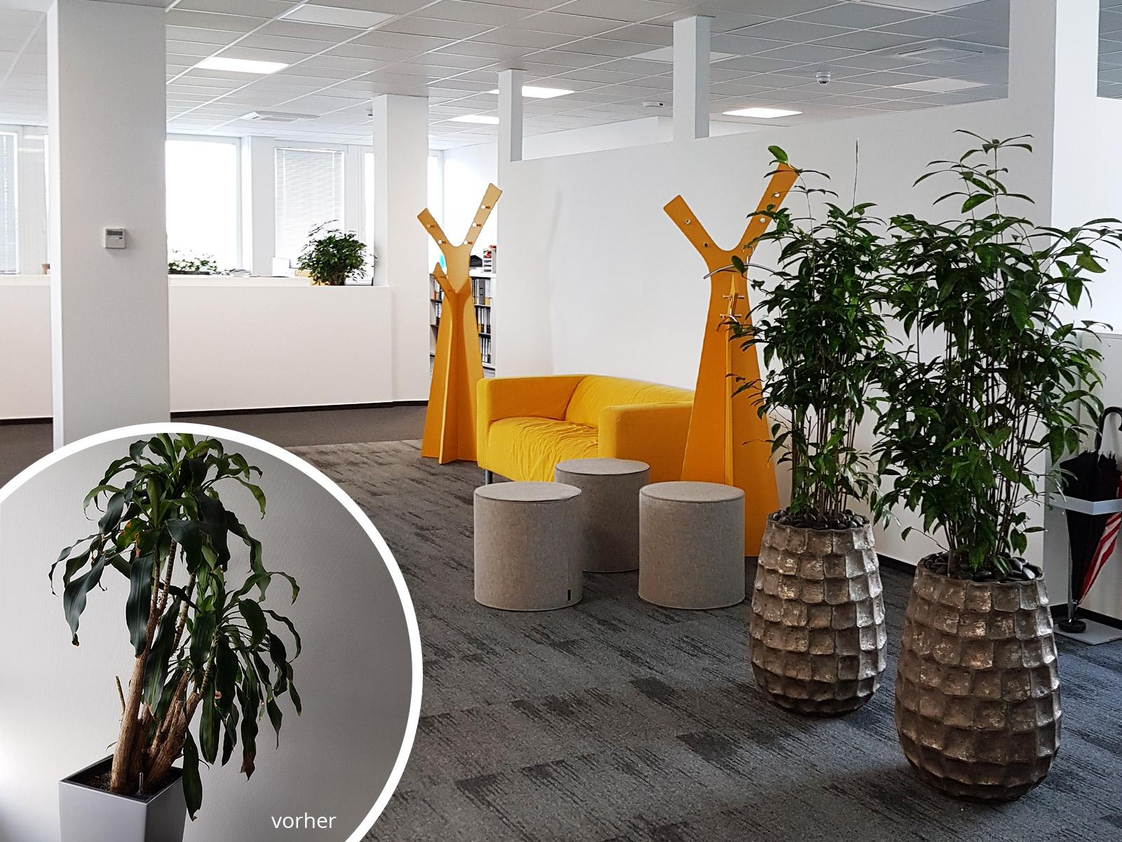 raumbegr nung eines b rogeb udes referenz objekt in eschborn hydroflora gmbh. Black Bedroom Furniture Sets. Home Design Ideas