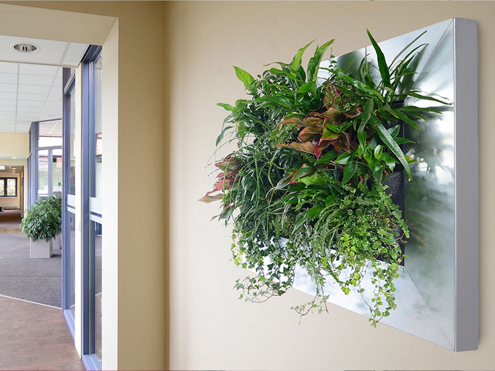 wandgarten selber bauen wunderbar b robegr nung sichtschutz b ropflanzen wandgarten zuhause. Black Bedroom Furniture Sets. Home Design Ideas