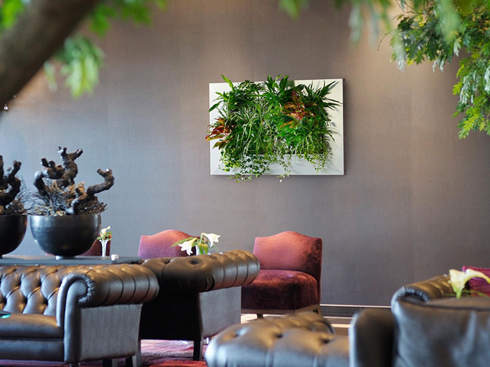 Wandbegrünung Innen Selber Machen pflanzenbilder hydroflora kleinode im grünen kleid