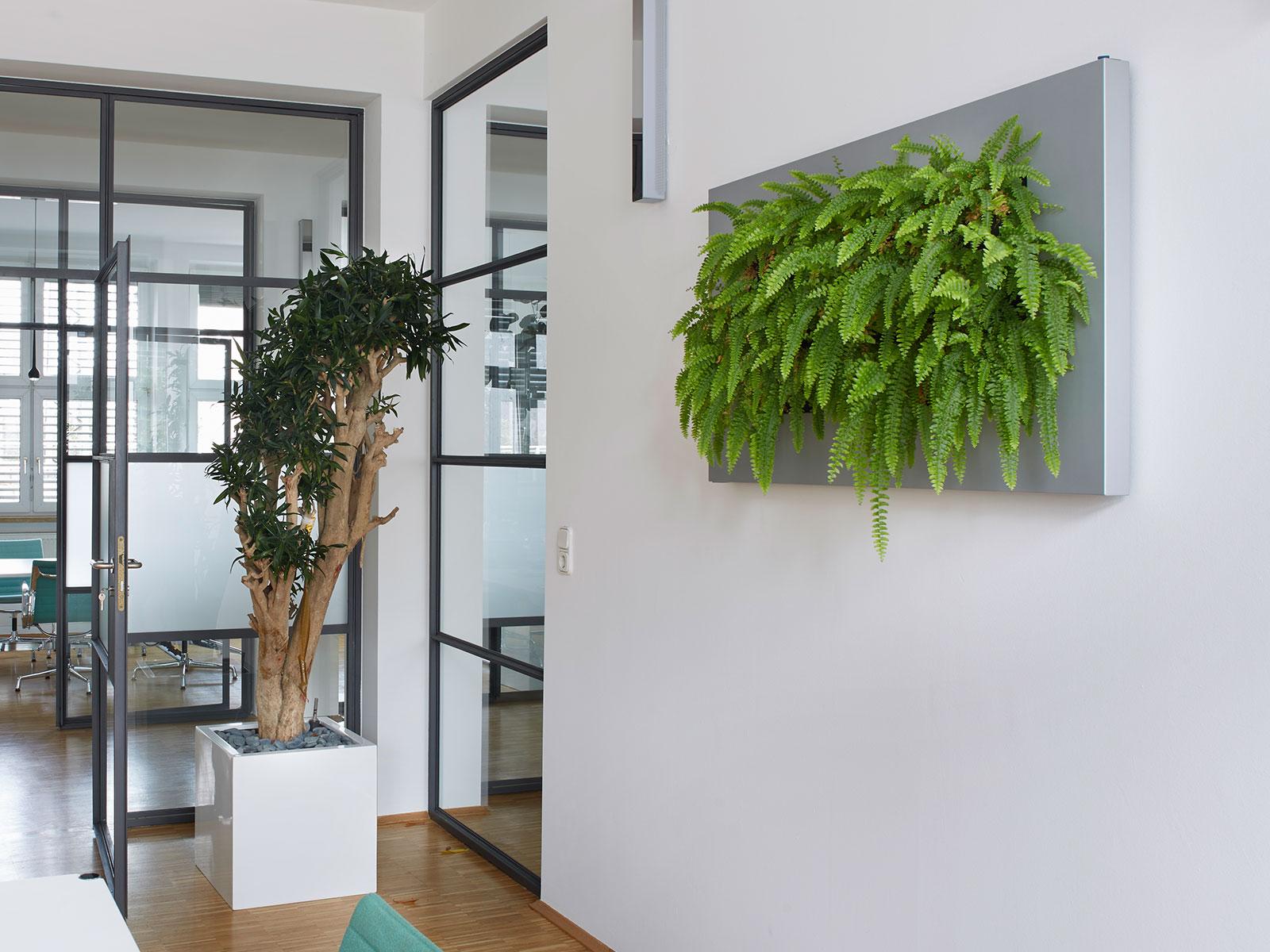 Impressionen Unserer Pflanzenbilder