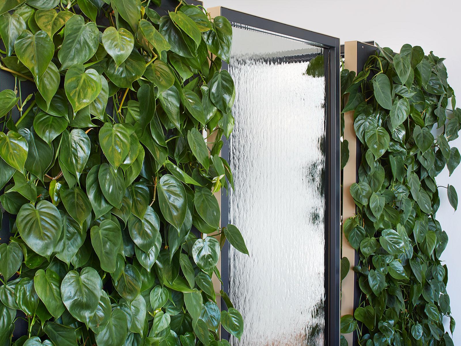 mehr privatsph re durch mobile pflanzenw nde von hydroflora hydroflora gmbh. Black Bedroom Furniture Sets. Home Design Ideas