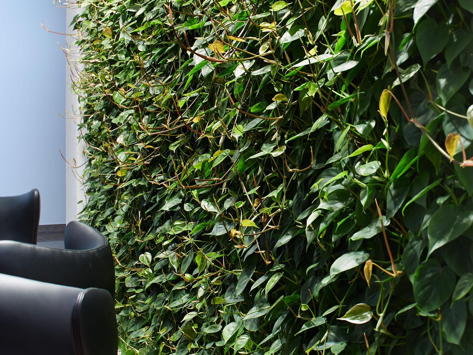 ein gl schen im gr nen die pflanzenwand zieht in die hotelbar hydroflora gmbh. Black Bedroom Furniture Sets. Home Design Ideas